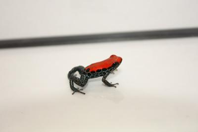 20111021-reticulatus.jpg