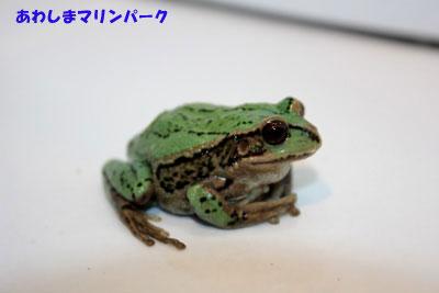 20111208-1128g1.jpg