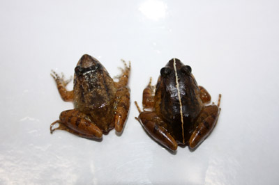 20121123-ikkakudoria1.jpg
