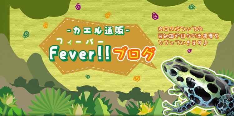 カエル通販 Feaver!!ブログ。カエルについての豆知識や日々の出来事をつづっていきます♪